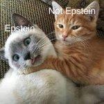 Cat-Epstein.jpg