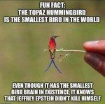 Epstein-Bird.jpg